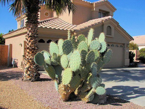 Оригінальна рослина літопс: утримання та догляд в домашніх умовах
