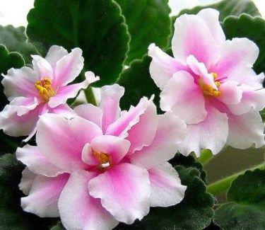 Основні види кімнатних квітів