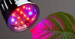 Освітлення теплиці світлодіодними лампами: особливості та переваги, види і способи монтажу своїми руками