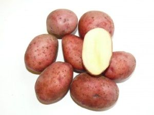 Характеристики картоплі сорту Любава