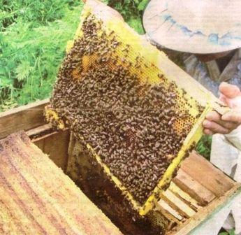 Бджільництво, освоєння досвіду бджолярів