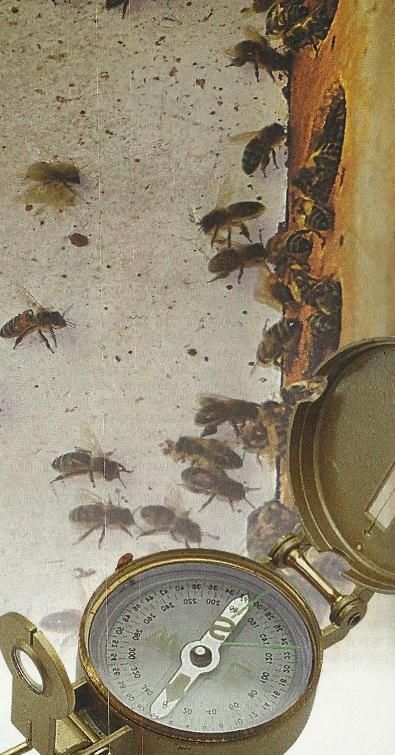 Бджоли, організація обльоту під час переїзду на нове місце