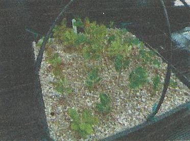 Перліт і вермикуліт, властивості і застосування в садівництві та городництві