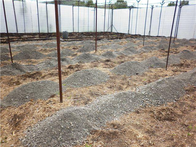 Живильні і структурують властивості піску, з використання в органічному природному землеробстві