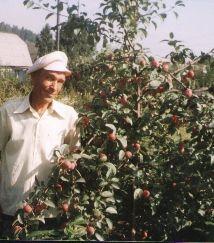 Плодові дерева, посадка