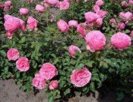 квіткові