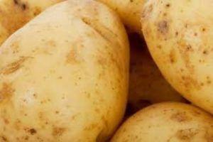 Подарунок селекціонерів - картопля «казка»: опис сорту, характеристика, фото
