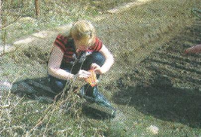 Підготовка насіння і посів моркви