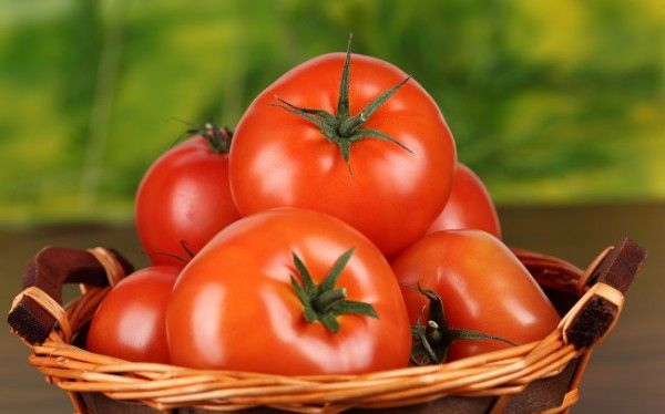 помідори 1