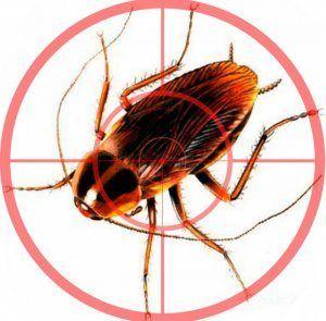 Детально про те, як позбавиться від тарганів в будинку: найефективніші способи боротьби, профілактика