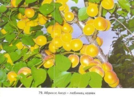 Плодовий рай валерія железова в саяногорську