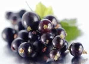 Корисні властивості і протипоказання чорної смородини