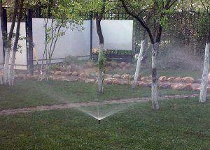 Полив саду: як поливати плодовий сад
