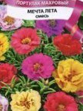 квіти портулак