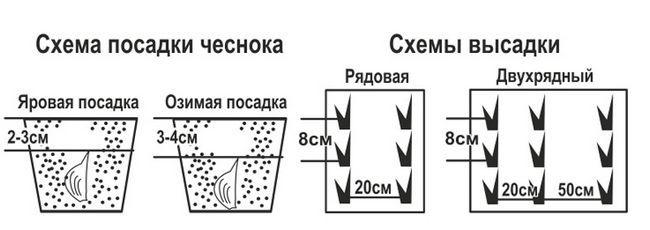 схема посадки часнику