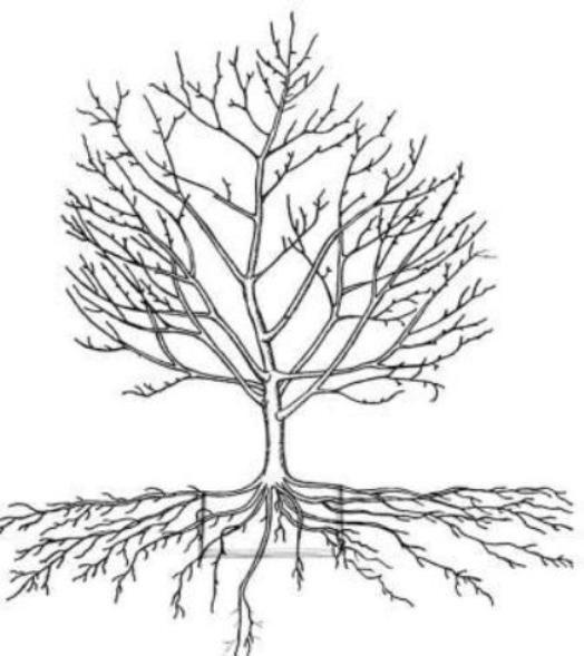 Правильна обрізка плодових дерев в саду