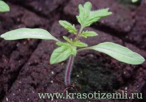 Правильна підготовка грунту для розсади