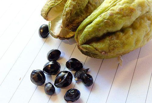 насіння лилейника