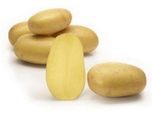 Представляємо вашій увазі сорт картоплі «королева анна», з його характеристикою, описом сорту та фото