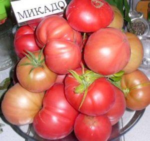 Прекрасний сорт томата мікадо: опис улюблених помідорів дачників