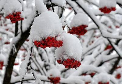 Причини пошкодження і загибелі садів в період зимівлі і заходи щодо підвищення зимостійкості плодових культур