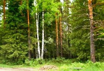 змішаний ліс