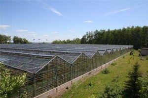 Виробництво і будівництво промислових фермерських теплиць: проекти, креслення і фото