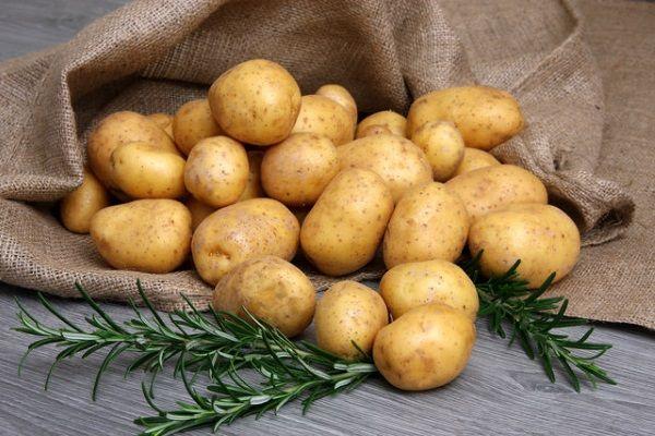 Картопля сорт Латона: фото і опис