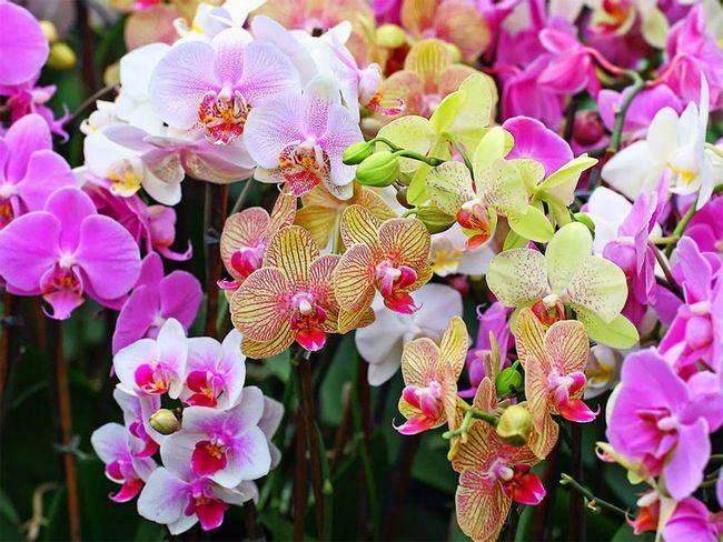 Розповімо про грунті для орхідей. Чи можна приготувати своїми руками і яку кору краще використовувати?