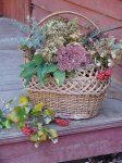 Рослини для зимових букетів