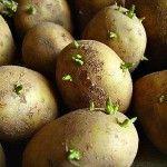 пророщування картоплі