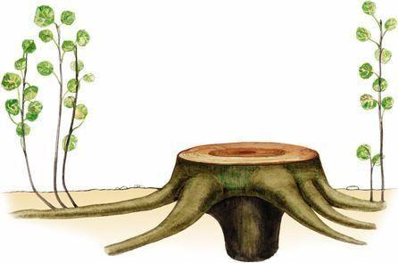 Розмноження рослин презентація