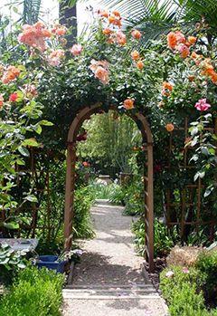Арка з троянд фото