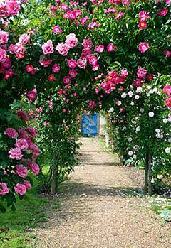 Арка з троянд в саду