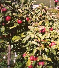 Сад чудес, нарис смирнової людмили борисівни