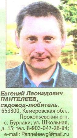 Сибірська стланцевой формування плодових культур в суворих кліматичних зонах