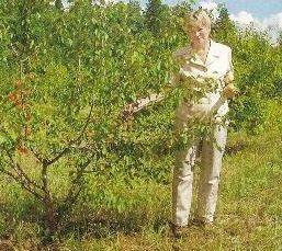 Сибірські абрикоси в згубних відлизі, пошук виходу
