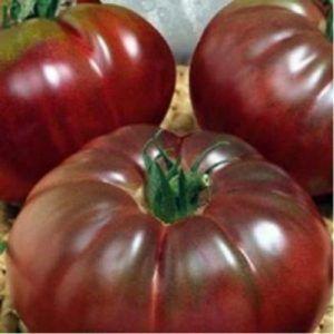 Сорт для справжніх цінителів - чудовий томат «чорний барон»