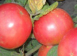 Сорт томата «демидов»: опис та характеристика середньостиглих помідорів