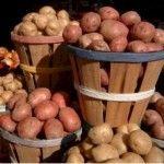 Великий урожай картоплі