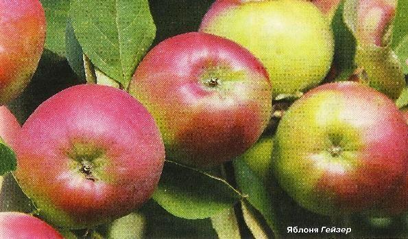 Сучасна селекція на шляху створення сортів з кращими якостями плодових культур