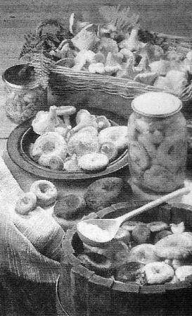 Способи гарячої і холодної засолювання грибів