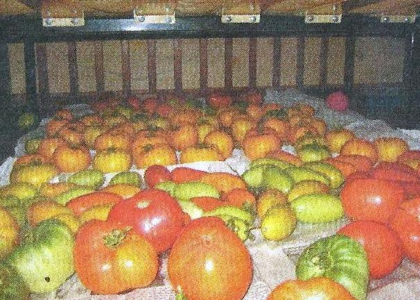 Способи зберігання свіжих помідорів, кращі сорти для зберігання