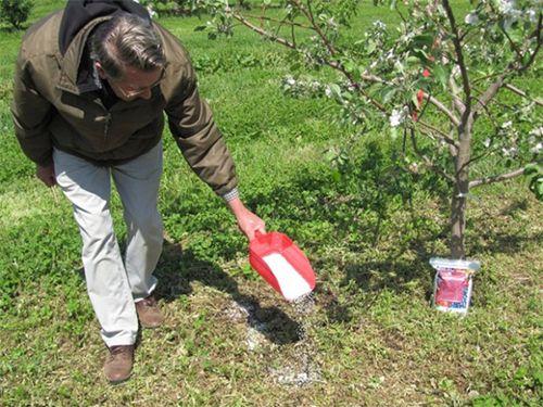 Підживлення дерев калієвими добривами
