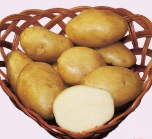 Найстаріший вітчизняний сорт картоплі «лорха» фото і характеристики