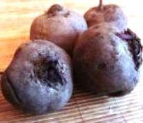 Буряк столовий: сорти, агротехніка, корисні властивості, посів буряка, насіння