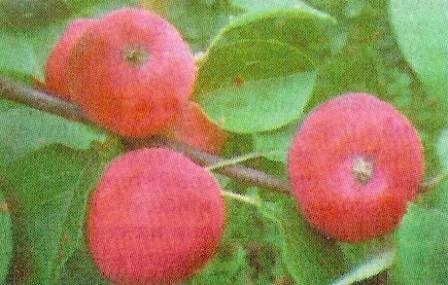Життєдіяльність організму рослин, біохімічні процеси