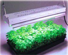 Світлодіоди для рослин