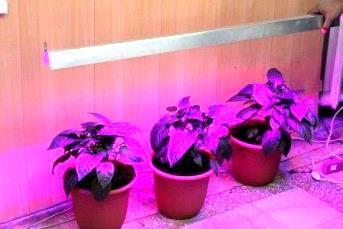 досветка розсади світлодіодами