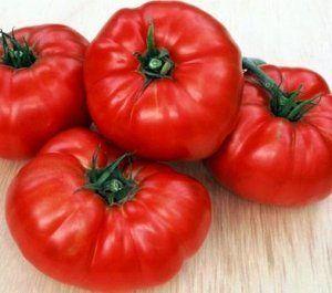 Томат для тих, хто любить побільше - опис сорту помідор «ведмежа лапа»